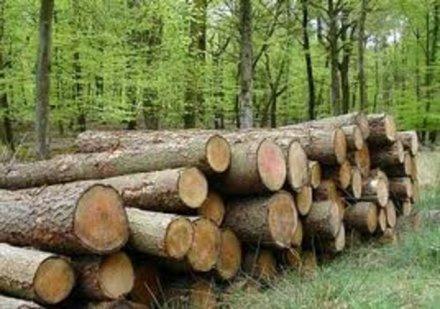Deforestazione in Italia