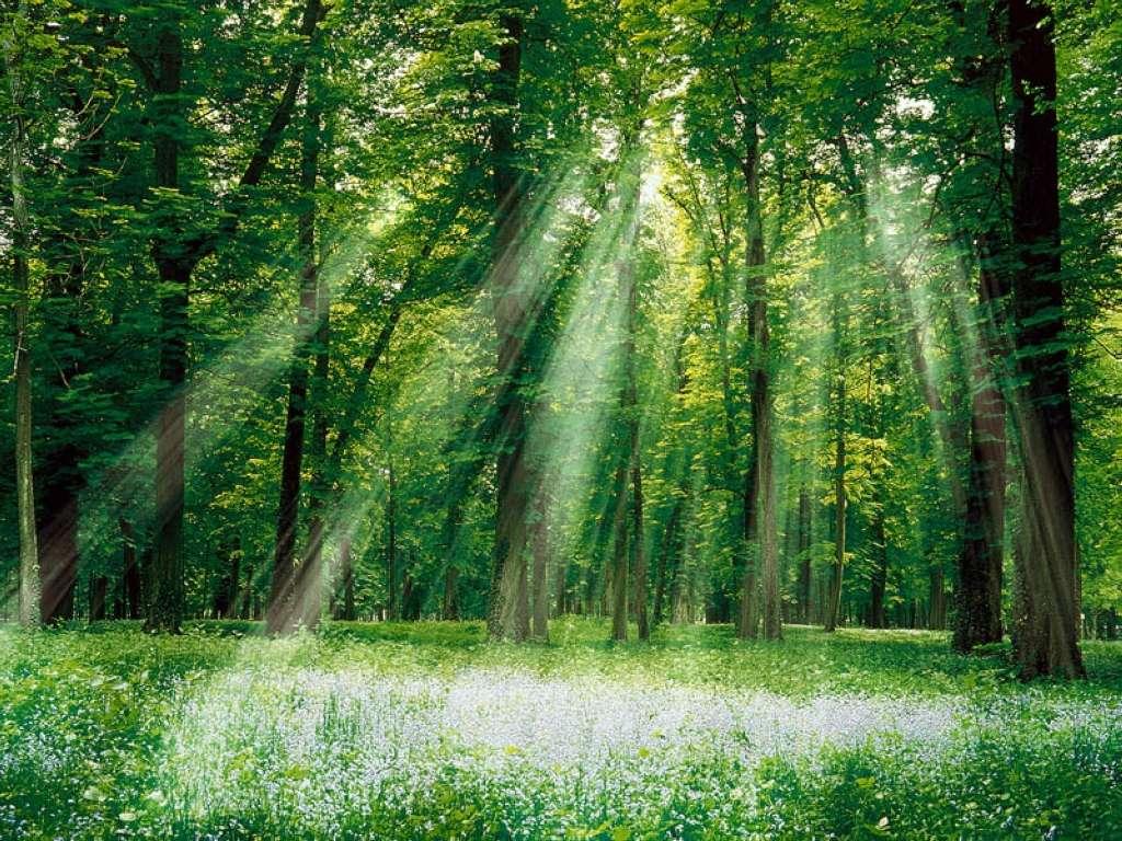 Foreste: patrimonio da salvare