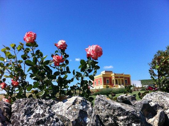 Sostenibilità: Villino Odaldo