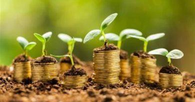 Soldi da cui nascono piante per indicare la finanza green
