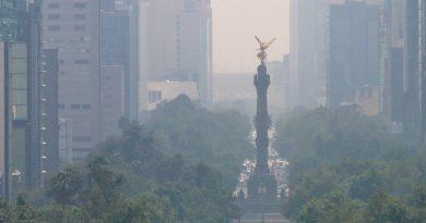 Messico piantare alberi