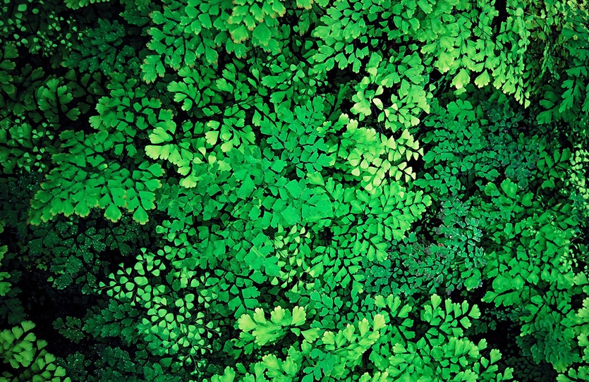 Effetto Greening