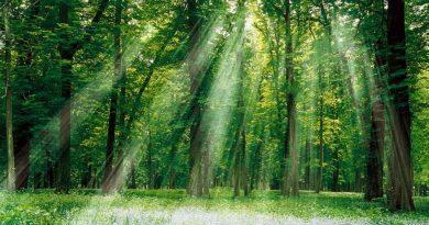 Foresta in cui filtra la luce tra gli alberi e illumina un prato