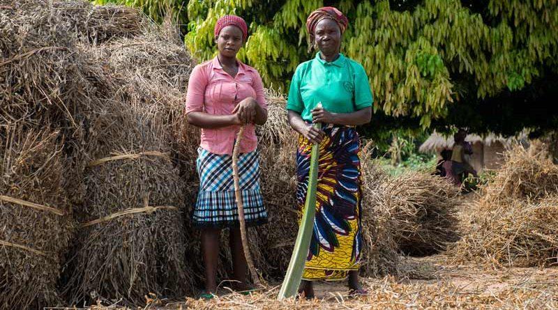 Due donne nigeriane che lavorano nell'agricoltura senza elettricità