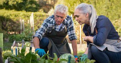 Due persone anziane che curano un campo agricolo in ottica di economia circolare in Spagna