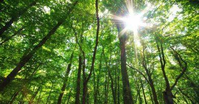 Foresta europea che rientra nel piano dell'Unione Europea per il salvataggio del clima e la riduzione del carbonio