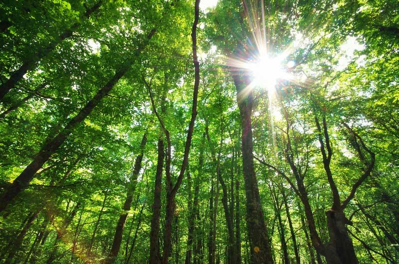 Unione Europea: le foreste per salvare il clima
