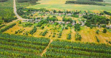 Nuove foreste nell'Unione Europea