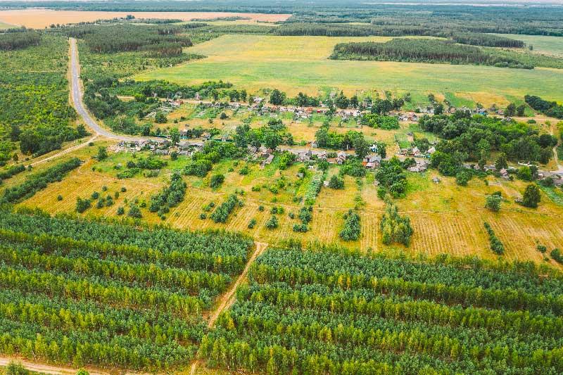 Foreste: un piano per la crescita in Europa
